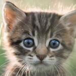 cat-questions